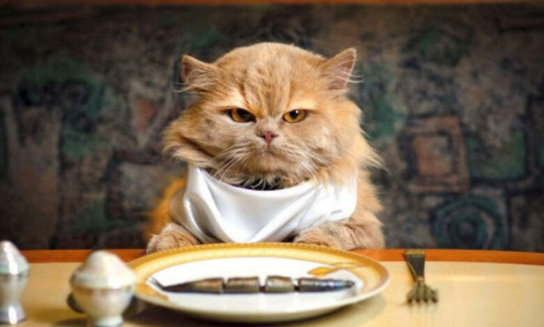 Gato comiento